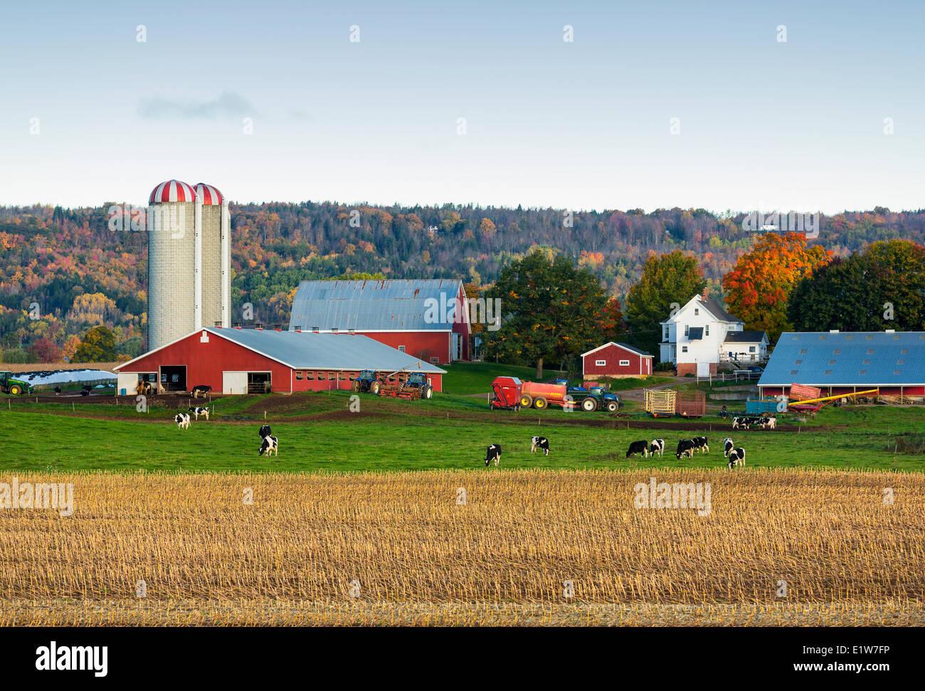 Dairy Farm, Brooklyn, Nova Scotia, Canada Immagini Stock