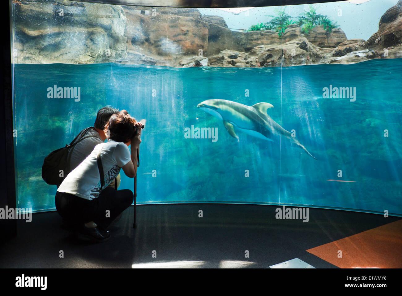 Paio di scattare una foto di un delfino a Osaka Acquario Kaiyukan, Osaka, Giappone Immagini Stock