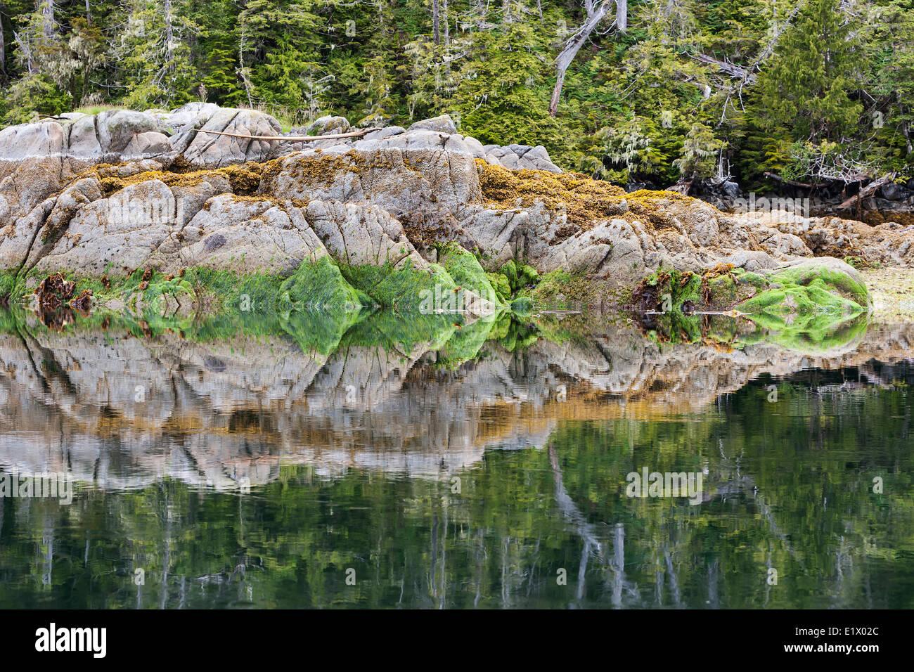 Riflessioni in acque calme danno luogo alla natura del design. Dodwell isola il grande orso Rainforest British Columbia Immagini Stock