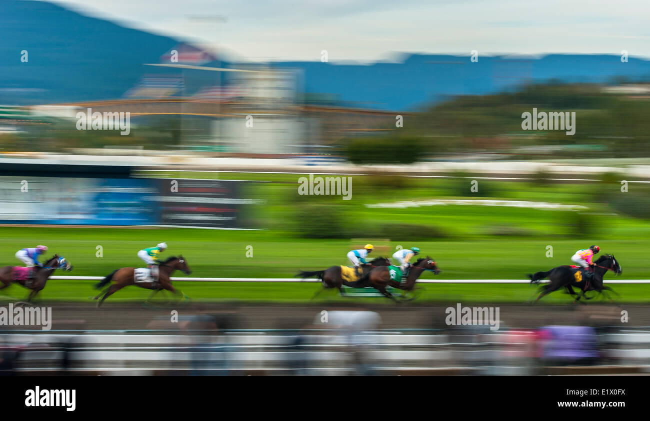 Corse di cavalli a Hastings Park, Vancouver, British Columbia, Canada Immagini Stock