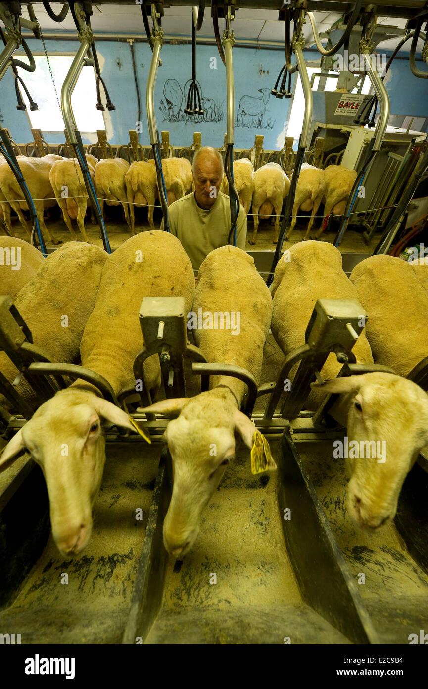 Francia, Aveyron, Hermilix, pecore fattoria Jean Louis Ricard e Alice Immagini Stock