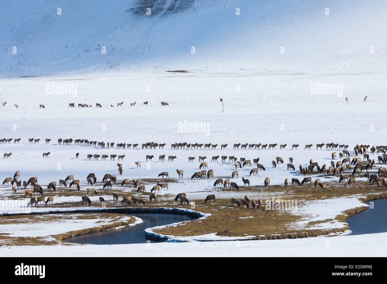 Stati Uniti Wyoming Jackson Hole migrazione invernale del wapiti Immagini Stock
