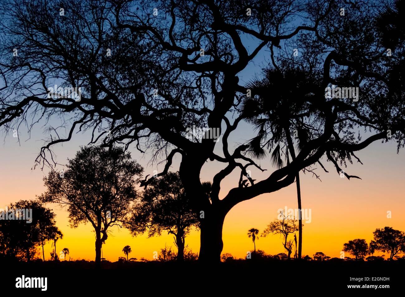 Zimbabwe Matabeleland North Provincia Parco Nazionale di Hwange Davison's Camp tipico paesaggio delle savane Immagini Stock