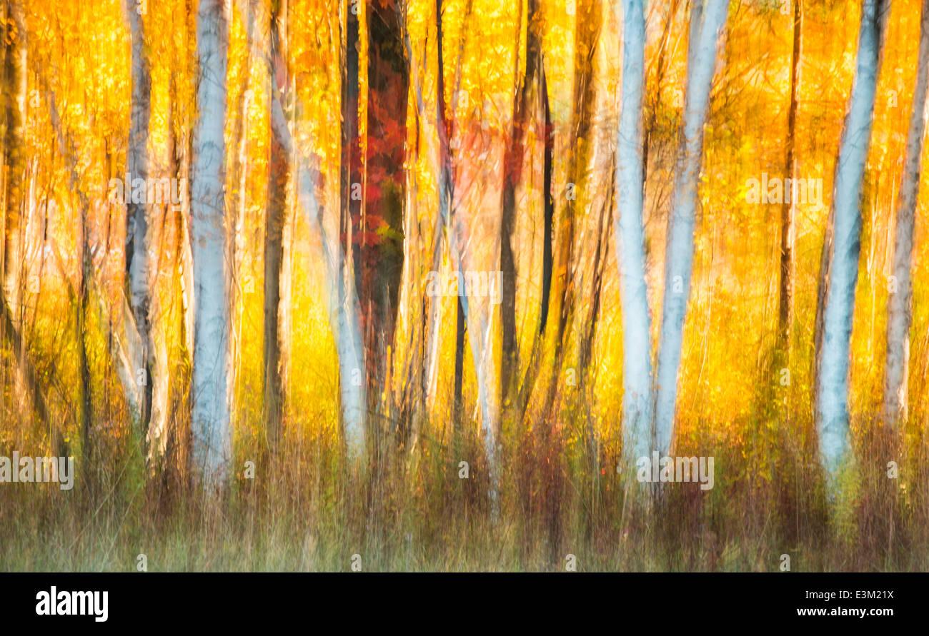 Un creative astratto della retroilluminazione colorata di caduta di alberi in Michigan del Nord, Stati Uniti. Immagini Stock