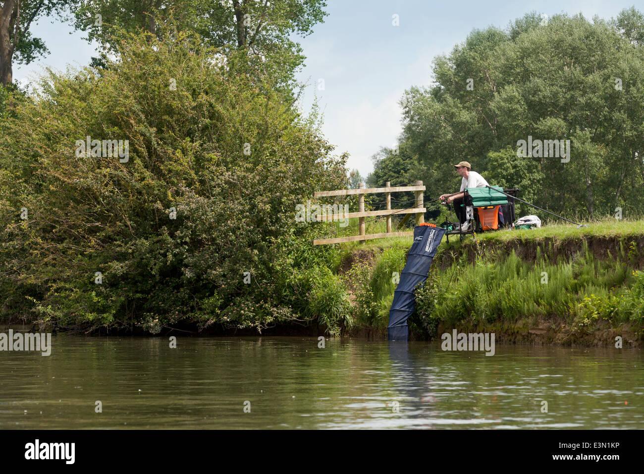 Il pescatore pesca sportiva, il Tamigi a Wallingford, Oxfordshire England Regno Unito Immagini Stock