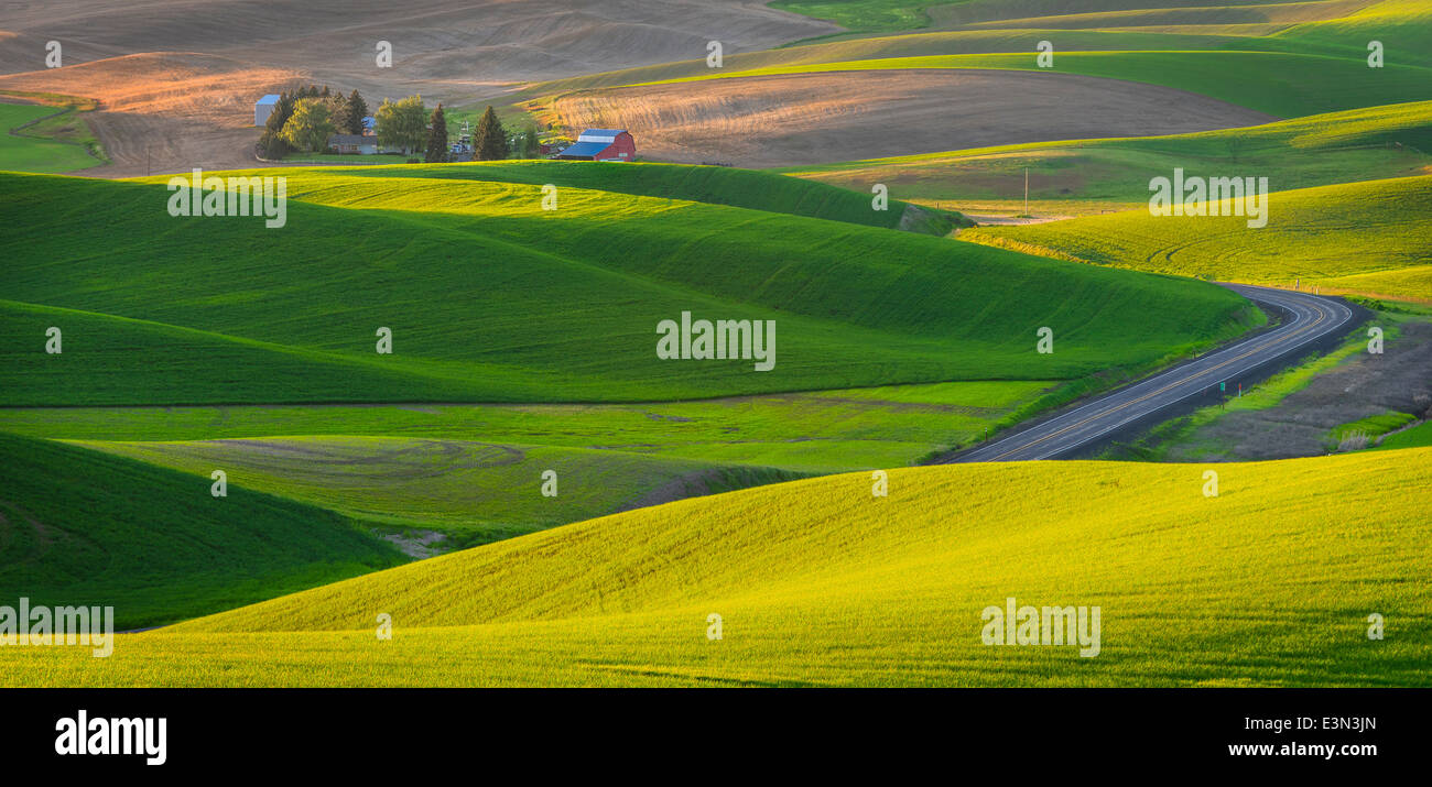 Il Palouse, Whitman County, WA: vista in elevazione del podere isolato tra i modelli astratti della laminazione Immagini Stock