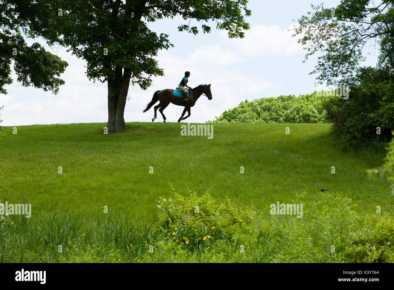 Cavallo cavaliere a cavallo attraverso il paesaggio di campo Immagini Stock