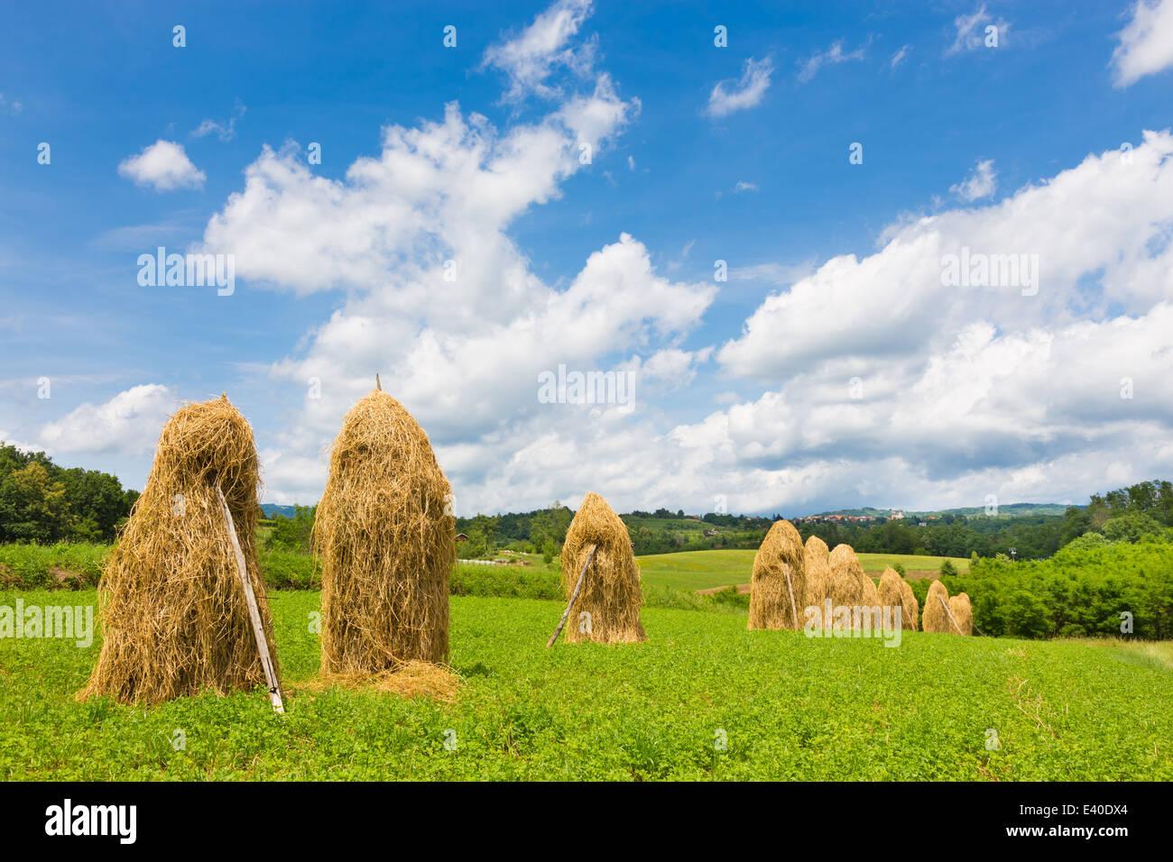 Tradizionali di pile di fieno sul campo. Immagini Stock