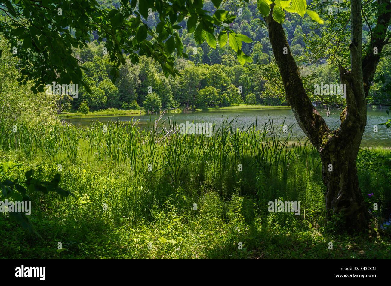 Vista nella foresta paesaggio del lago nel giorno di estate Immagini Stock
