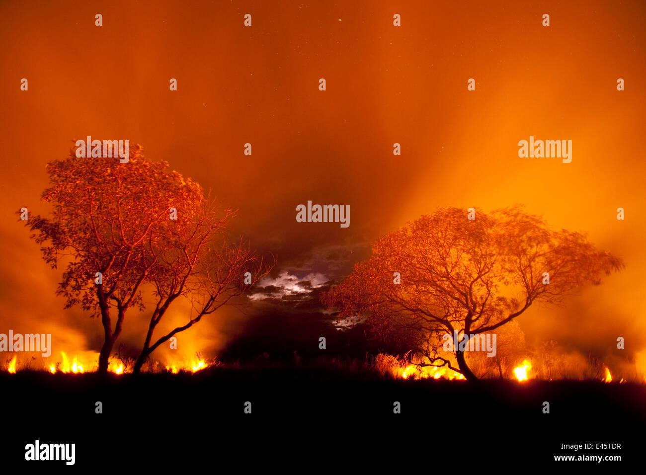 Fuoco d'erba di notte nel Pantanal, Brasile. Immagini Stock