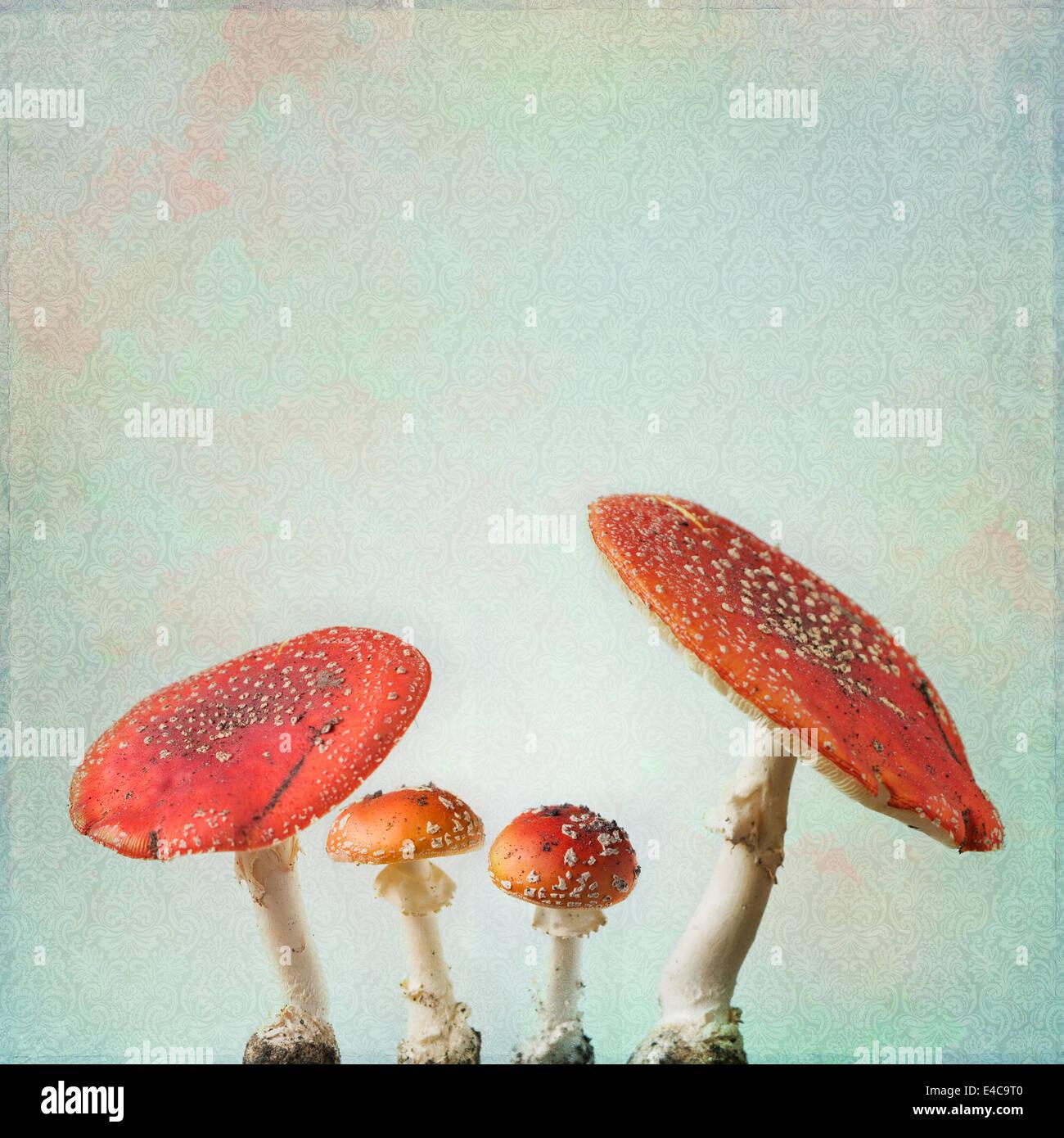 Vintage sfondo con fly agaric Immagini Stock