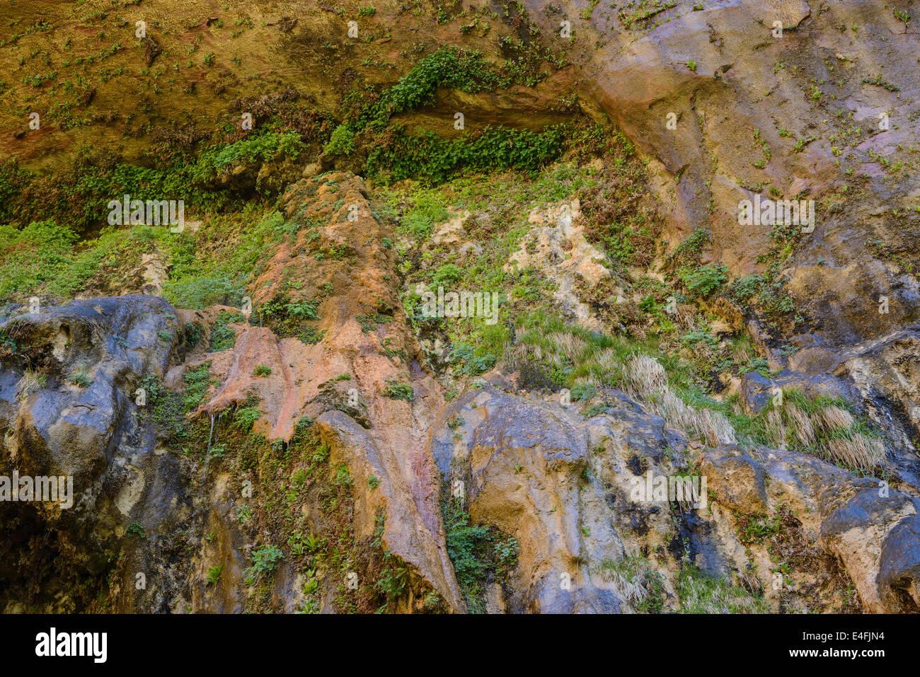 Giardini pensili di pianto Rock, Parco Nazionale Zion, Utah, Stati Uniti d'America Immagini Stock