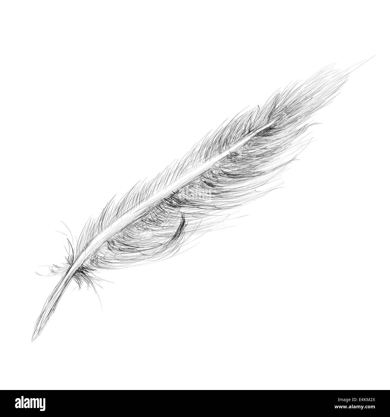 Feather mano bozzetto isolato su bianco Immagini Stock