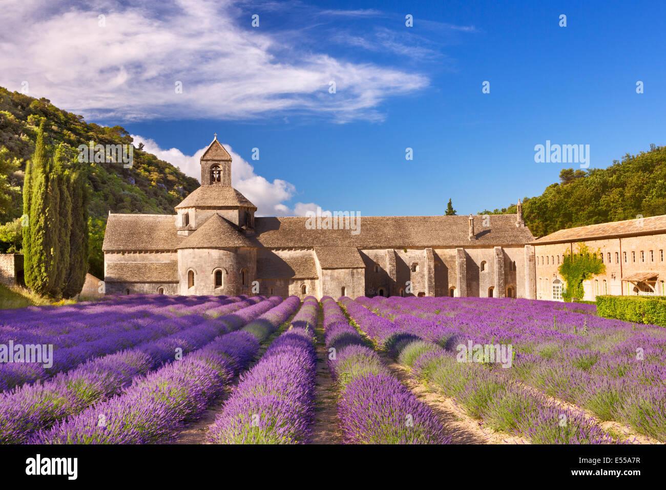 L'Abbaye de Senanque in Provenza, in Francia con la lavanda in fiore Immagini Stock