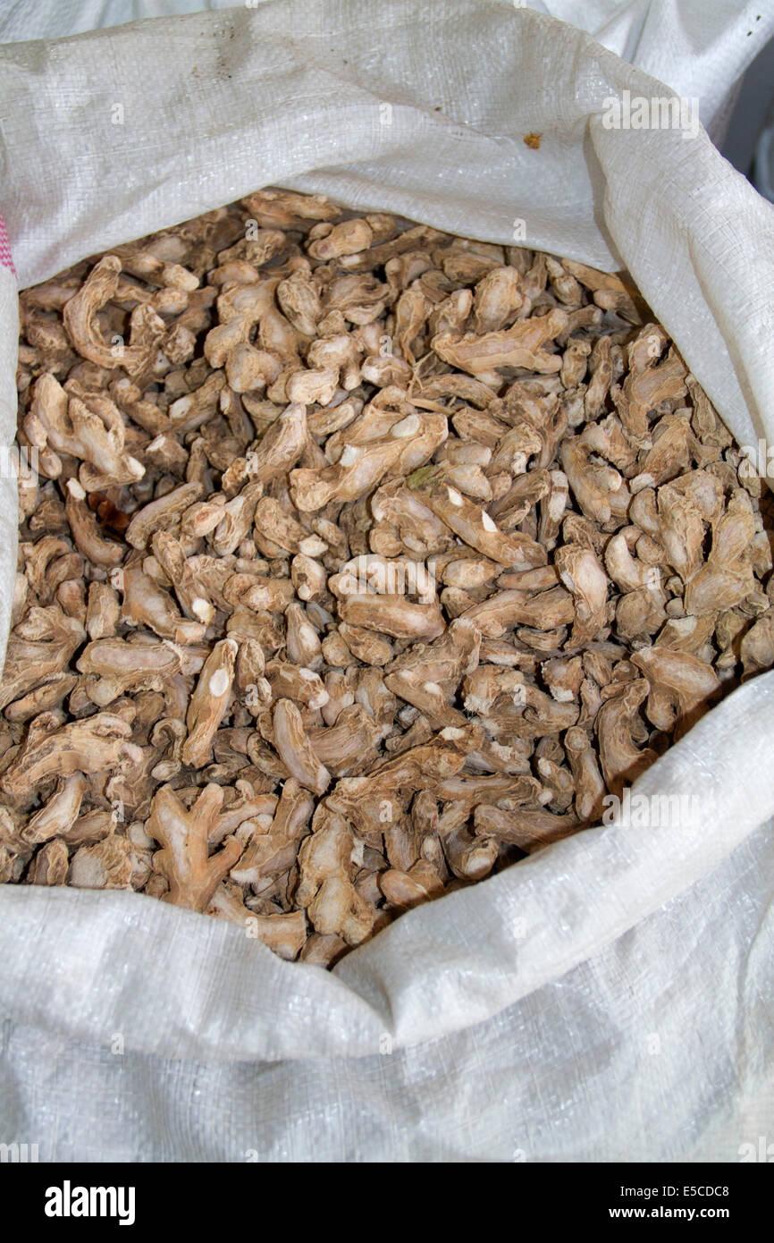 Sacco pieno di curcuma a plantation pronto a inviare al processore.(Curcuma longa).Il Kerala, India Immagini Stock