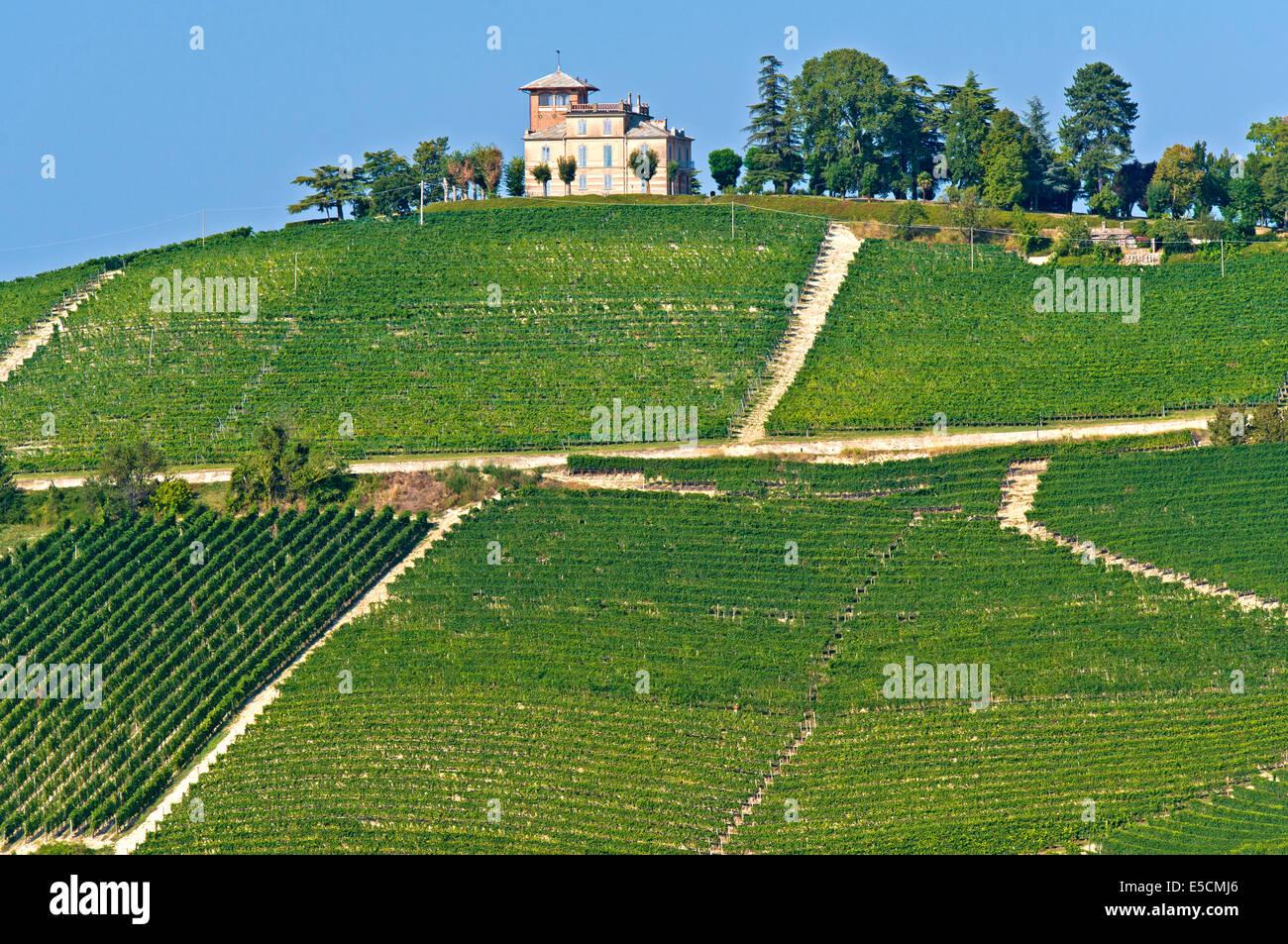 Vigneti per uva Nebbiolo in Alba, Piemonte, Italia Immagini Stock