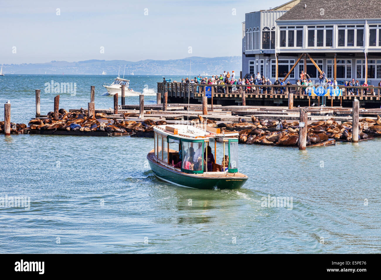 La folla di turisti si riuniscono per visualizzare i famosi leoni marini al Pier 39, San Francisco. Immagini Stock