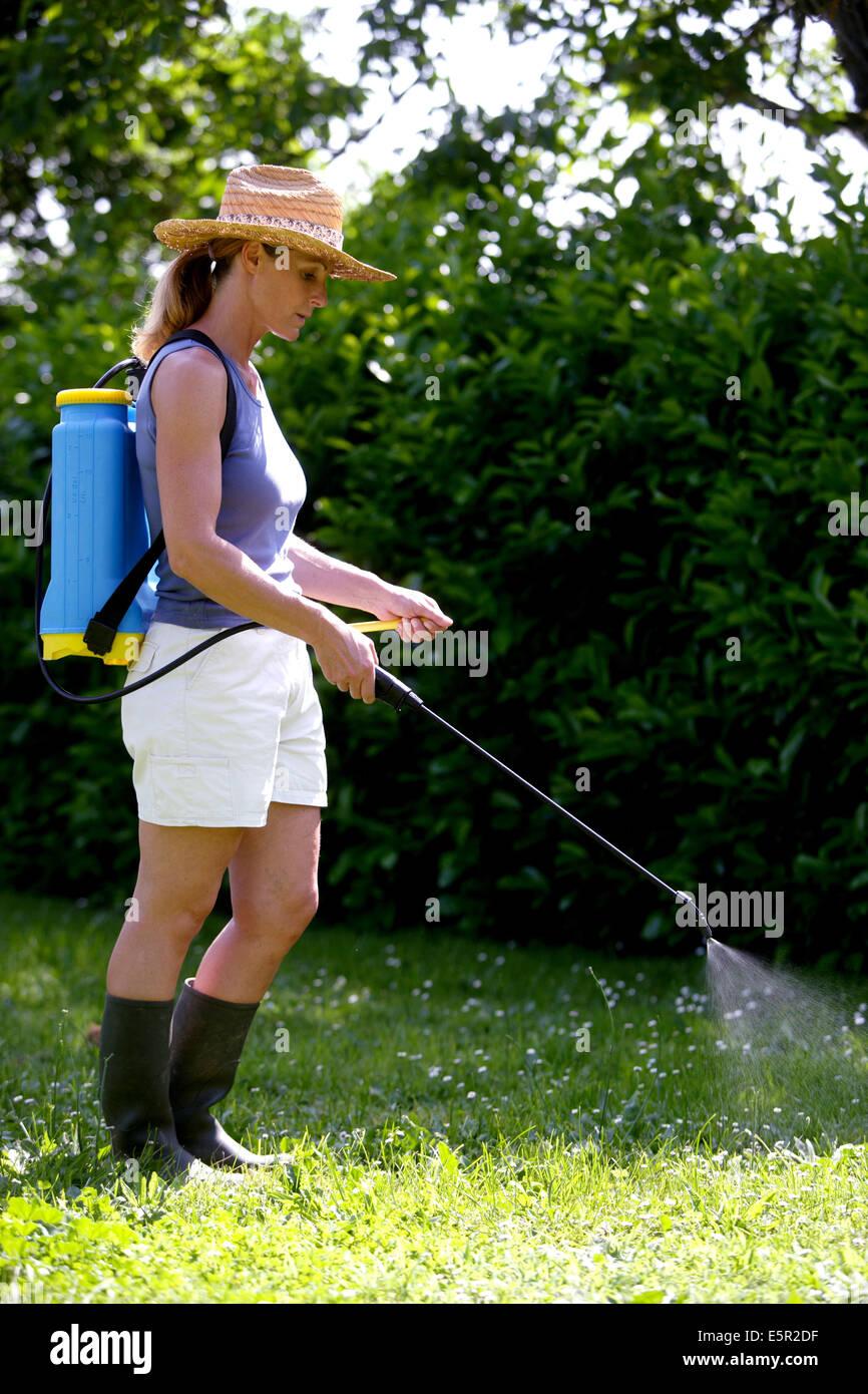 La donna la spruzzatura weed killer di antiparassitari in giardino. Immagini Stock