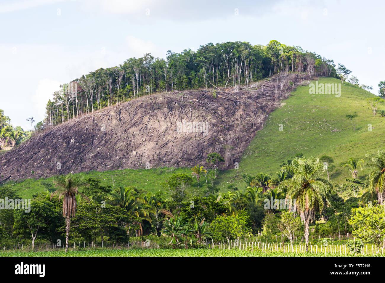 La deforestazione in Guatemala. Immagini Stock