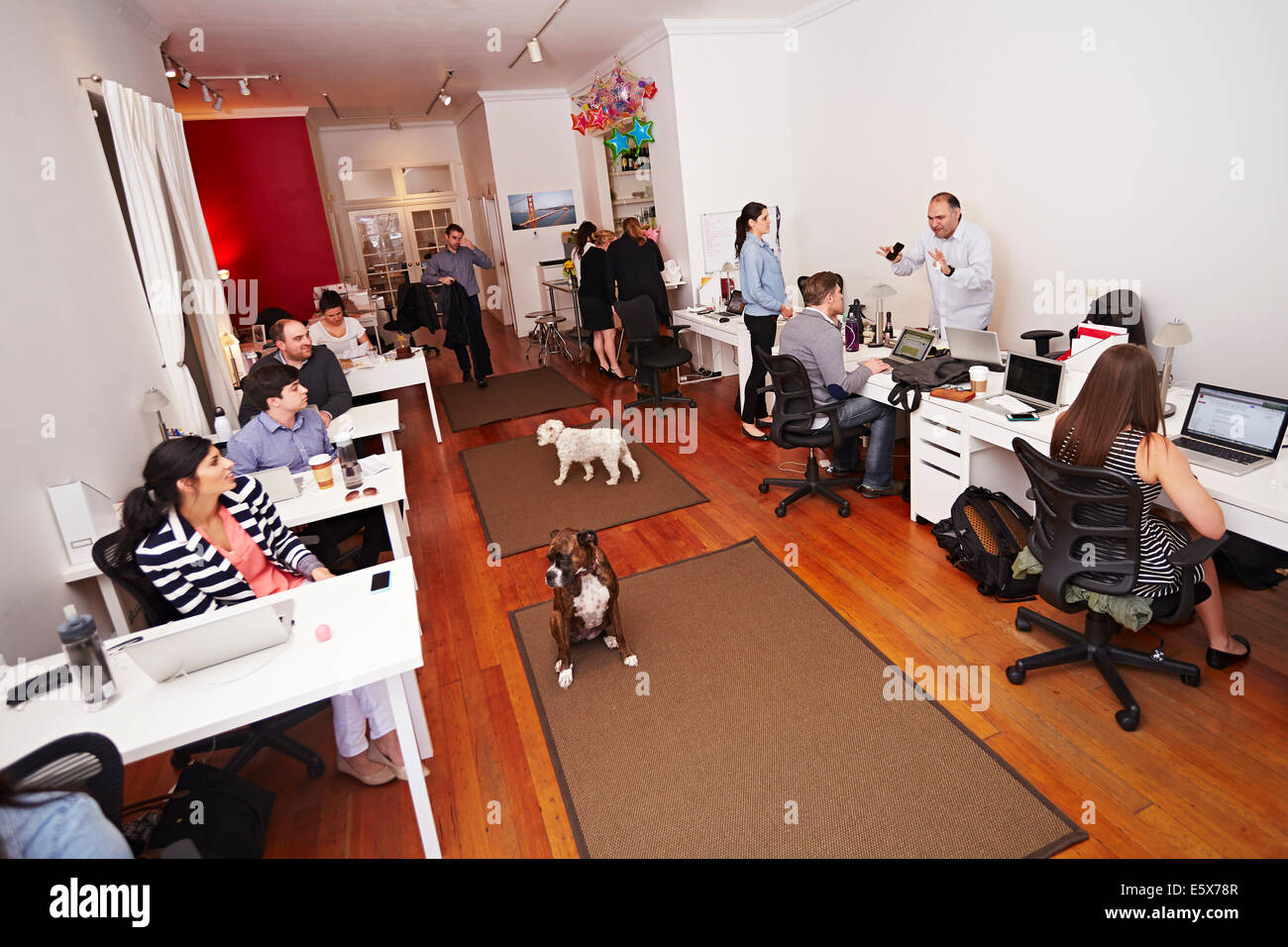 Le persone a lavorare in un ufficio moderno con i cani Foto Stock