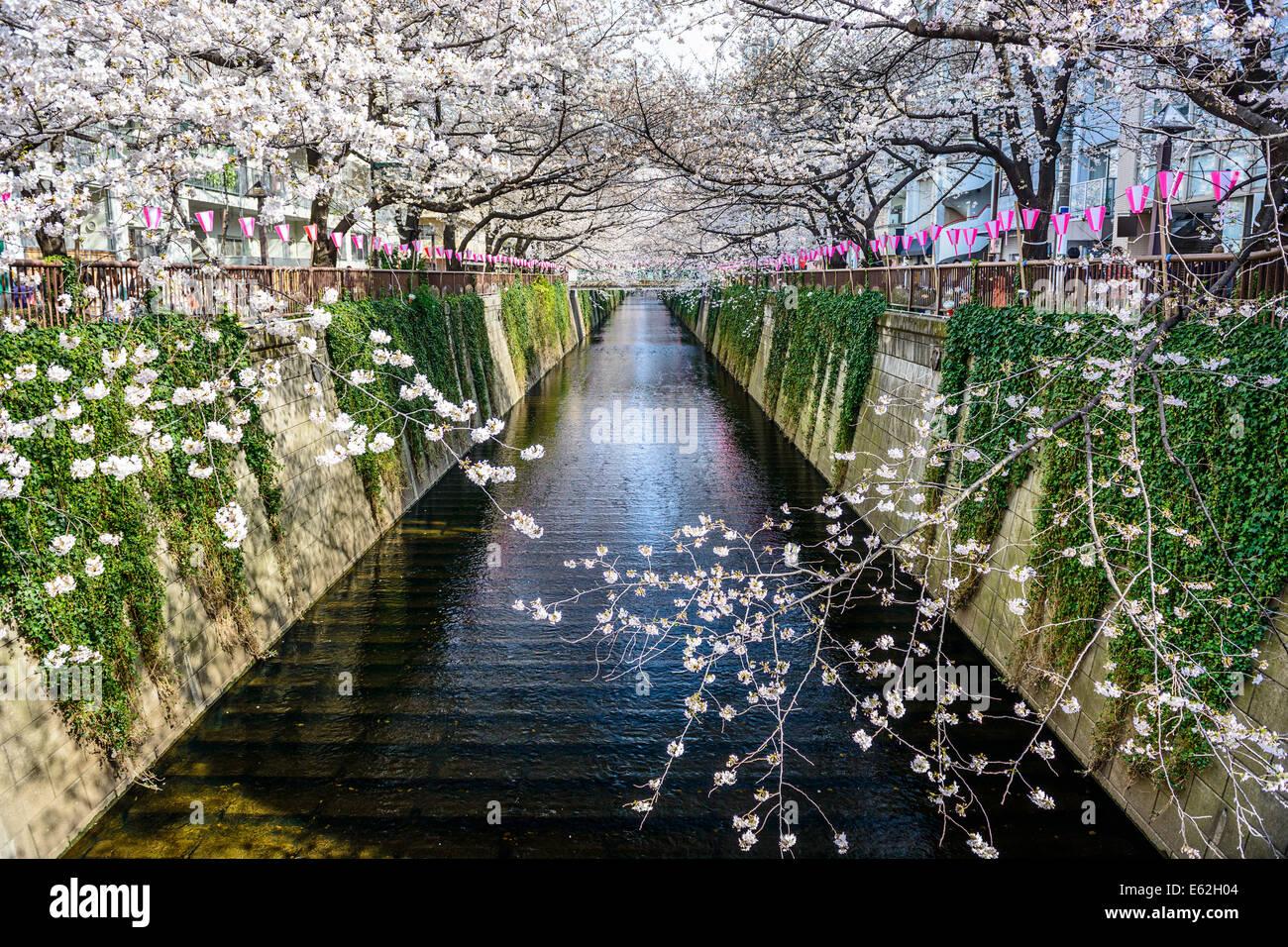 Tokyo, Giappone a Meguro Canal nella stagione primaverile. Immagini Stock