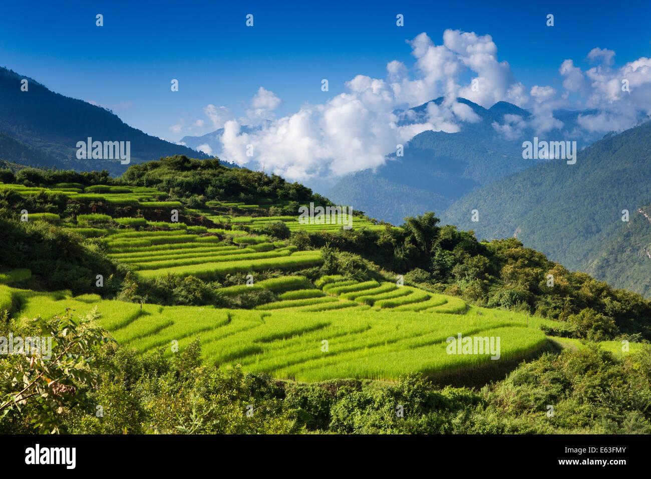 Il Bhutan orientale, Mongar, alta altitudine allevamento ...