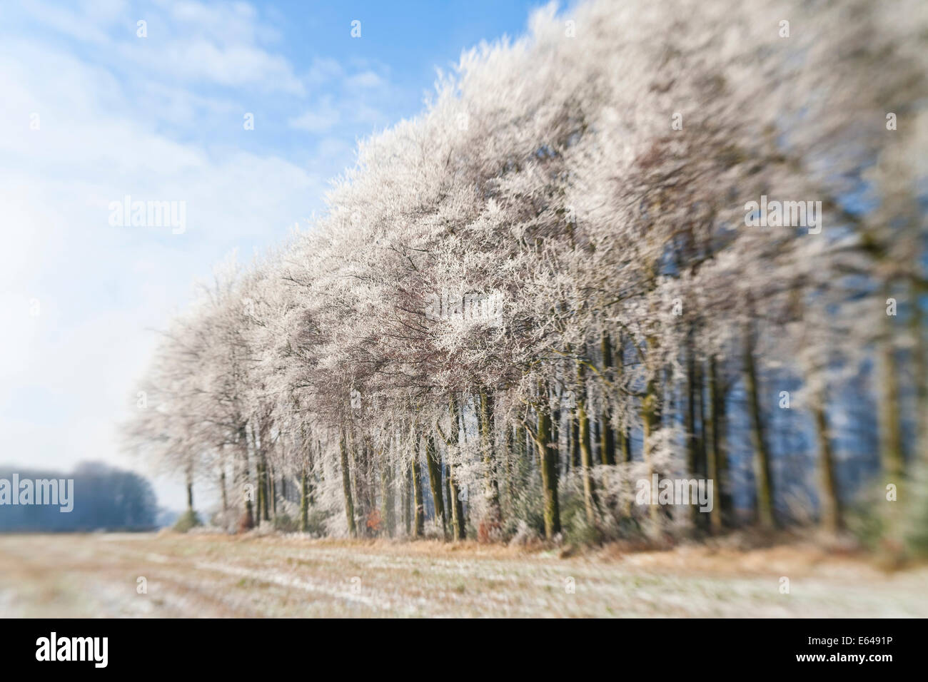 Bosco coperto di neve e di gelo, Gloucestershire, Regno Unito Immagini Stock