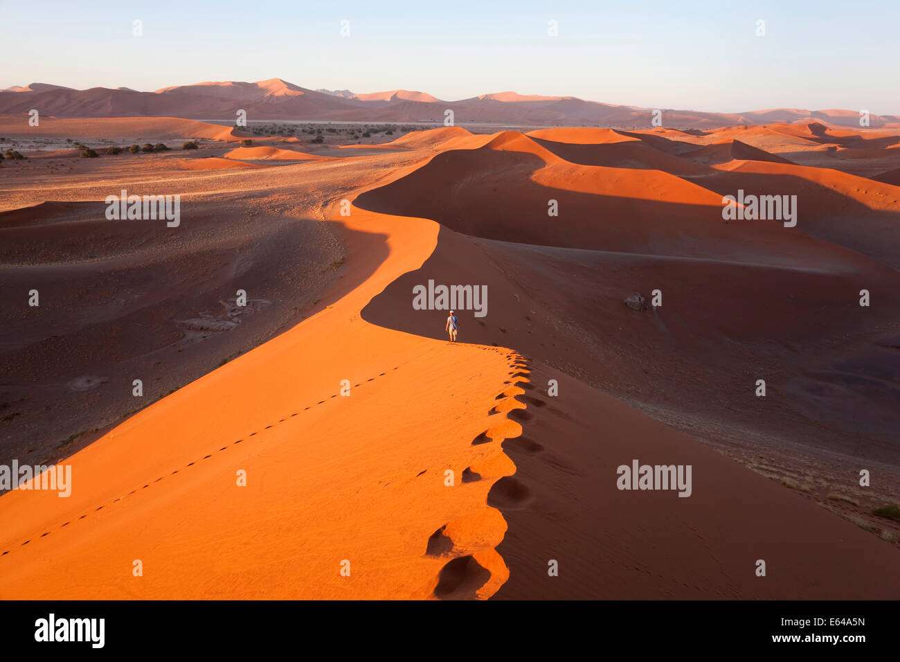 Uomo di mezza età arrampicata dune di sabbia, Namib Naukluft National Park, Namibia Immagini Stock