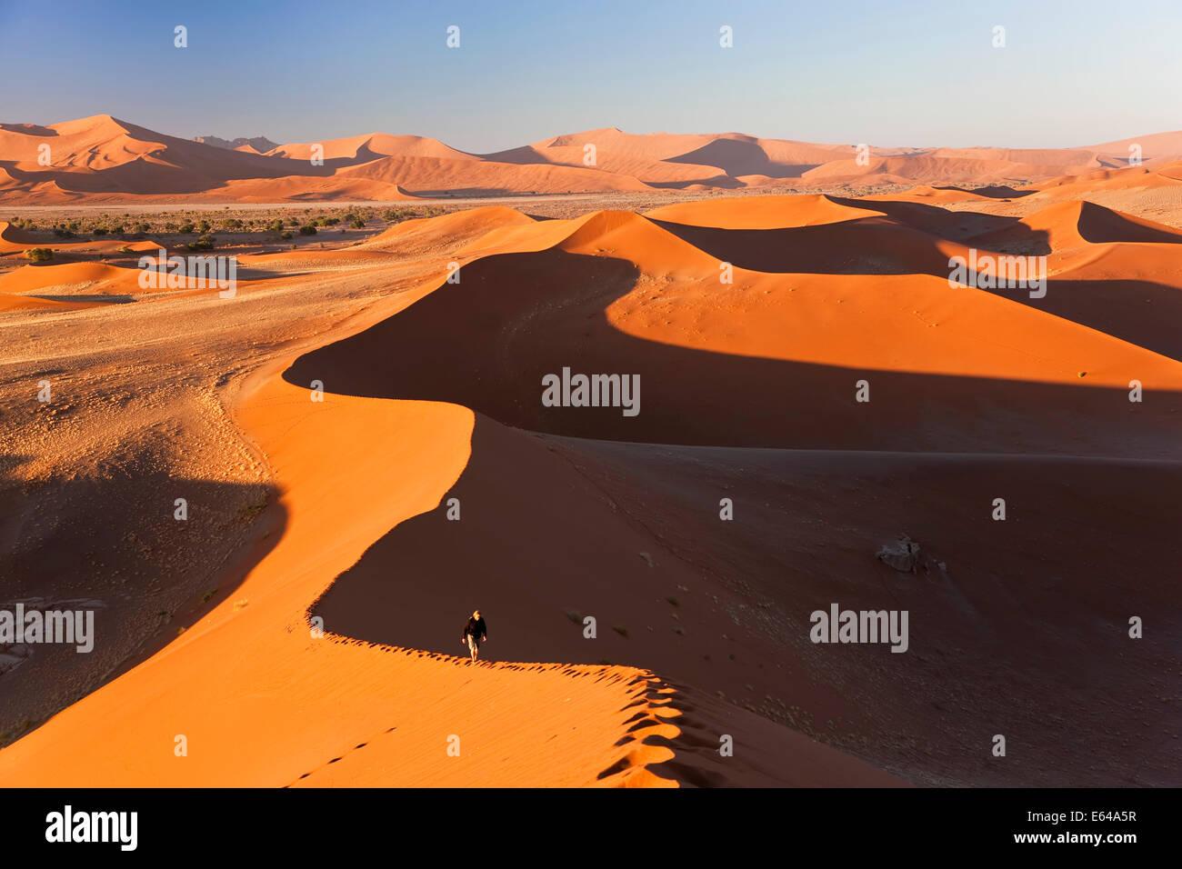 Uomo di arrampicata dune di sabbia, Namib Naukluft National Park, Namibia Immagini Stock