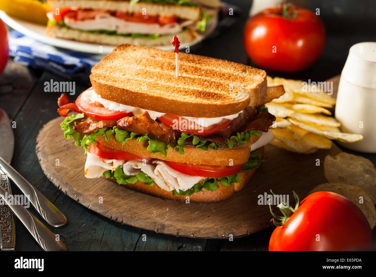 La Turchia e la pancetta Club Sandwich con lattuga e pomodoro Immagini Stock
