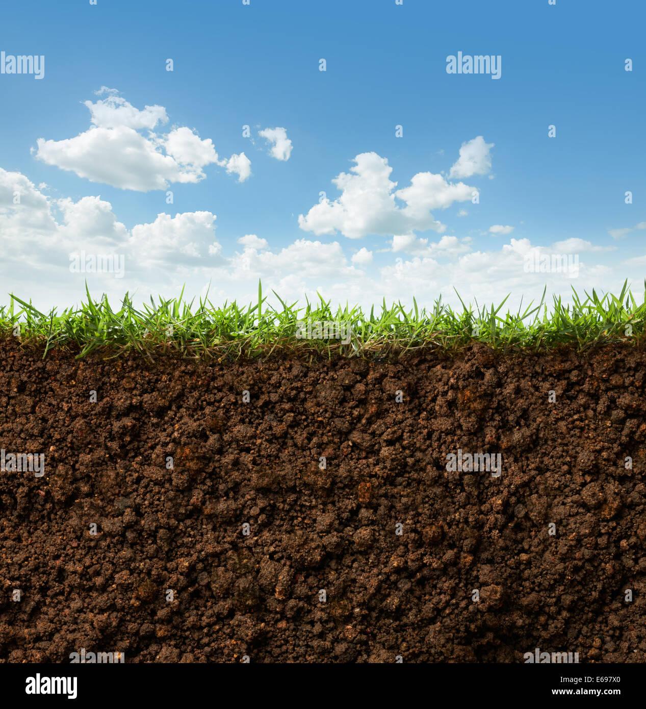 Sezione trasversale di erba e terreno contro il cielo blu Foto Stock