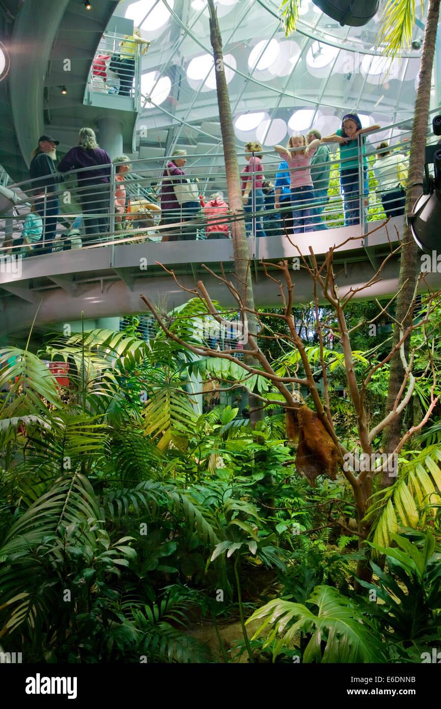 Foreste pluviali del mondo presentano, Accademia delle Scienze della California, Golden Gate Park di San Francisco, Immagini Stock