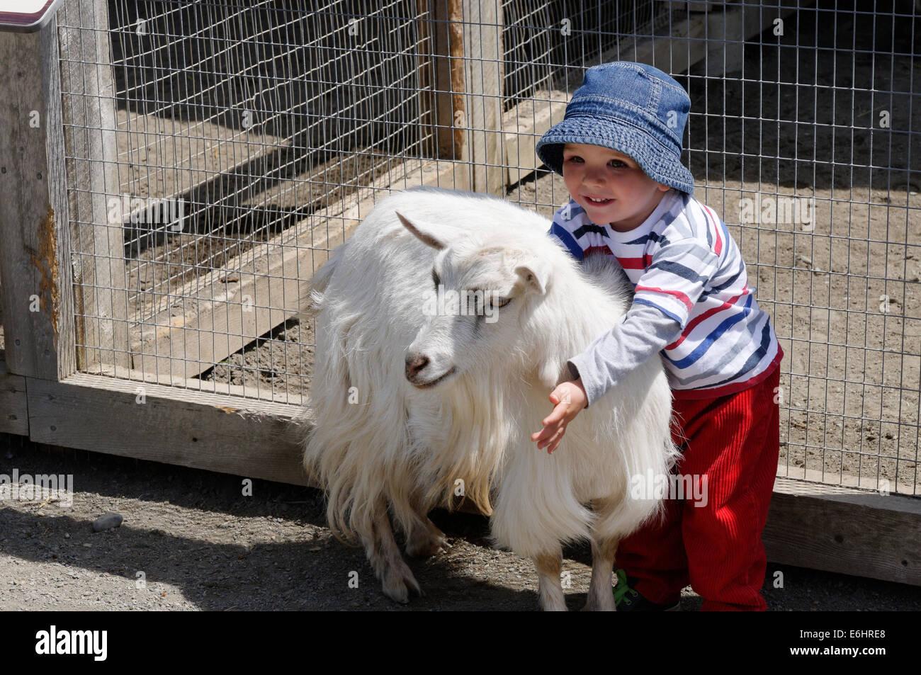 Un bel ragazzo giovane delightedly cuddling una capra su una fattoria degli animali Immagini Stock
