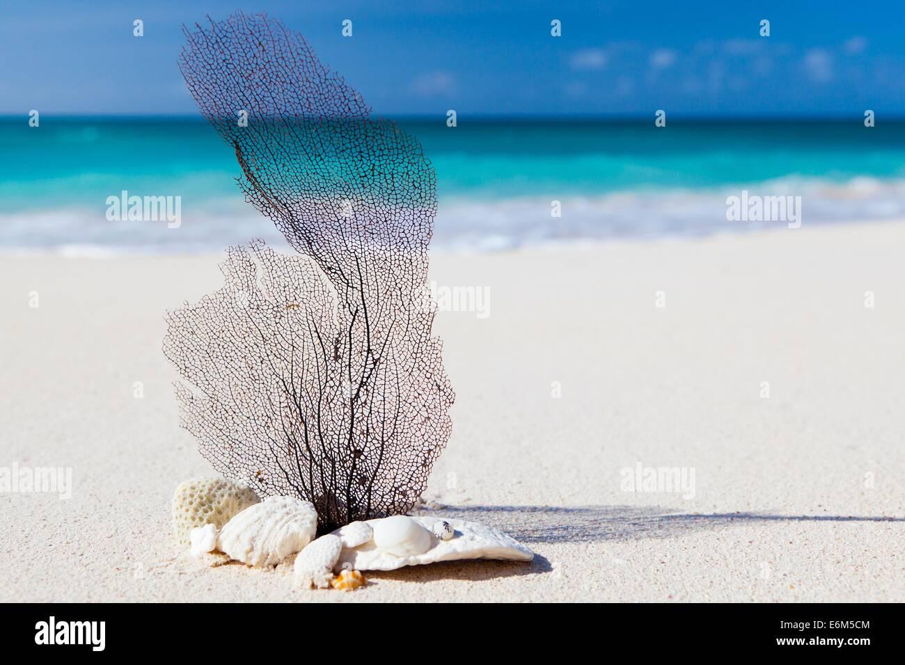 Spiaggia dei caraibi blu il concetto di bellezza natura esotica Immagini Stock