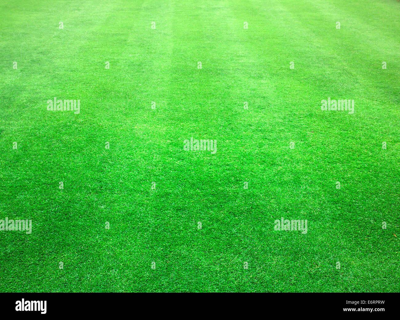 Football Field Background Immagini Football Field