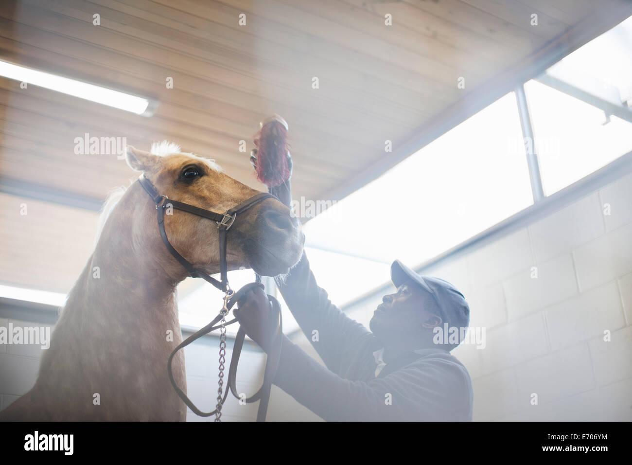 Basso angolo di vista stablehand maschio grooming cavallo nervoso Immagini Stock