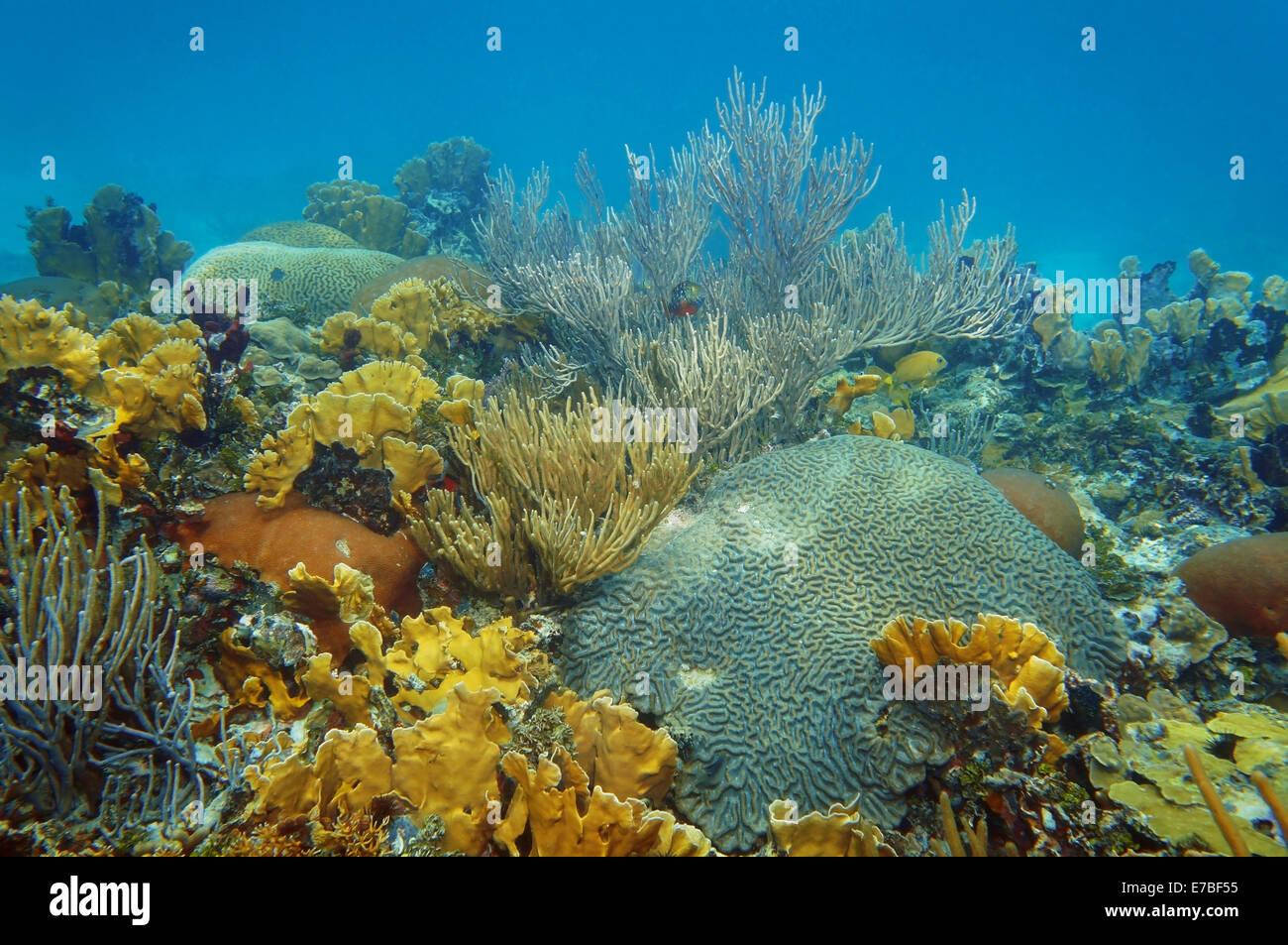 Paesaggio sottomarino in un sano barriera corallina del Mar dei Caraibi Immagini Stock