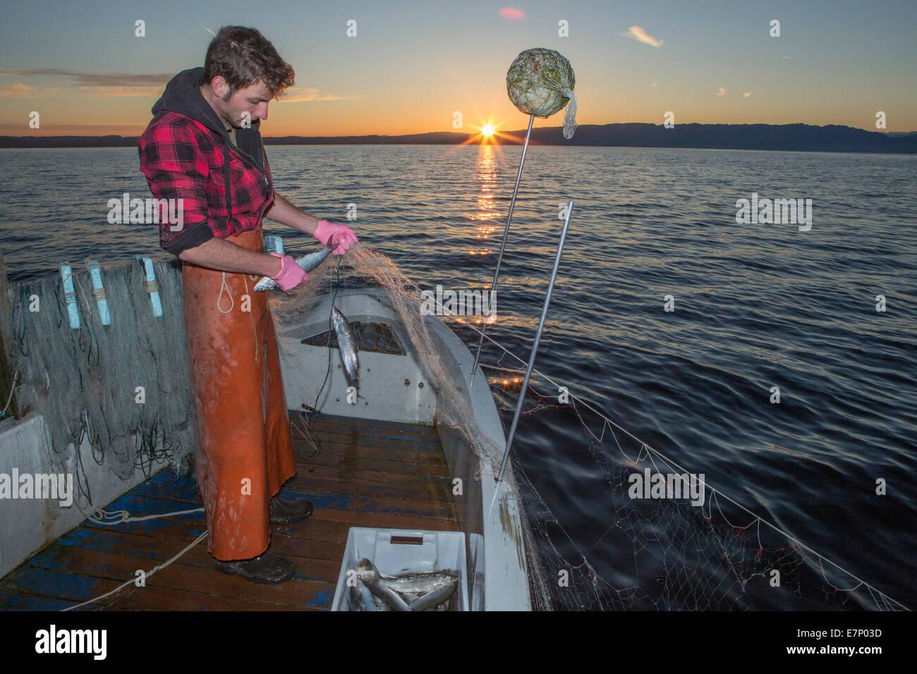 Il lago di Costanza, pescatore, il lago di Costanza, molla, Claudio Timo Görtz, lavoro, lavoro, occupazione, Immagini Stock