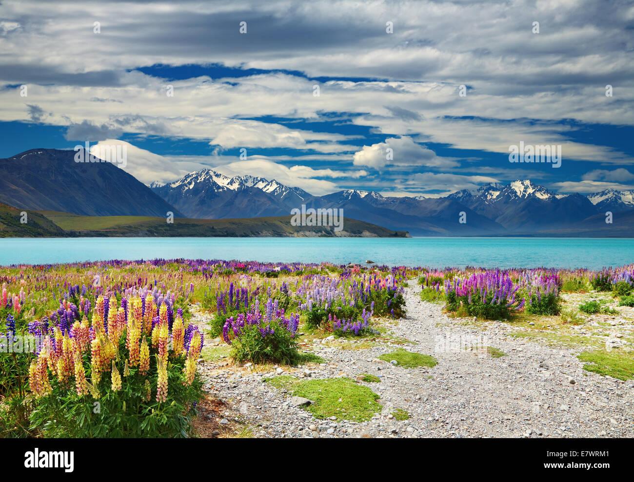 Lago Tekapo, Alpi del Sud, Nuova Zelanda Immagini Stock