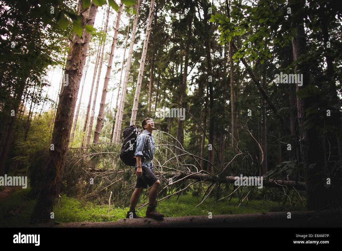 Uomo maturo escursioni nella foresta Immagini Stock