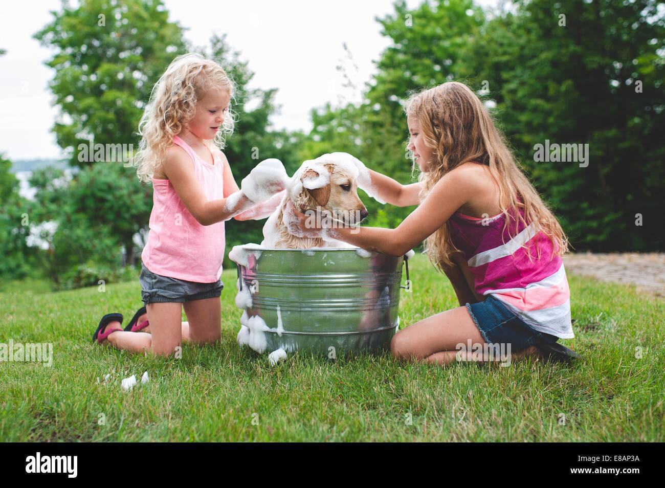 Due sorelle pet di balneazione Labrador Retriever cucciolo Immagini Stock