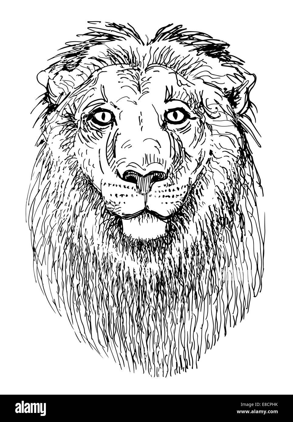 Artwork Lion Schizzo In Bianco E Nero Il Disegno Della Testa Degli