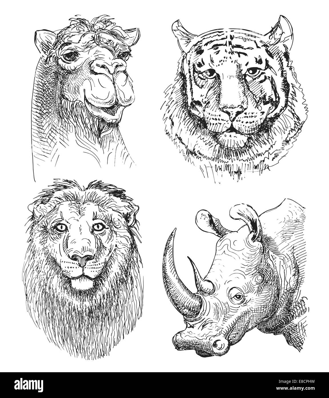 Insieme Di Testa Di Safari Animali In Bianco E Nero Disegno Foto