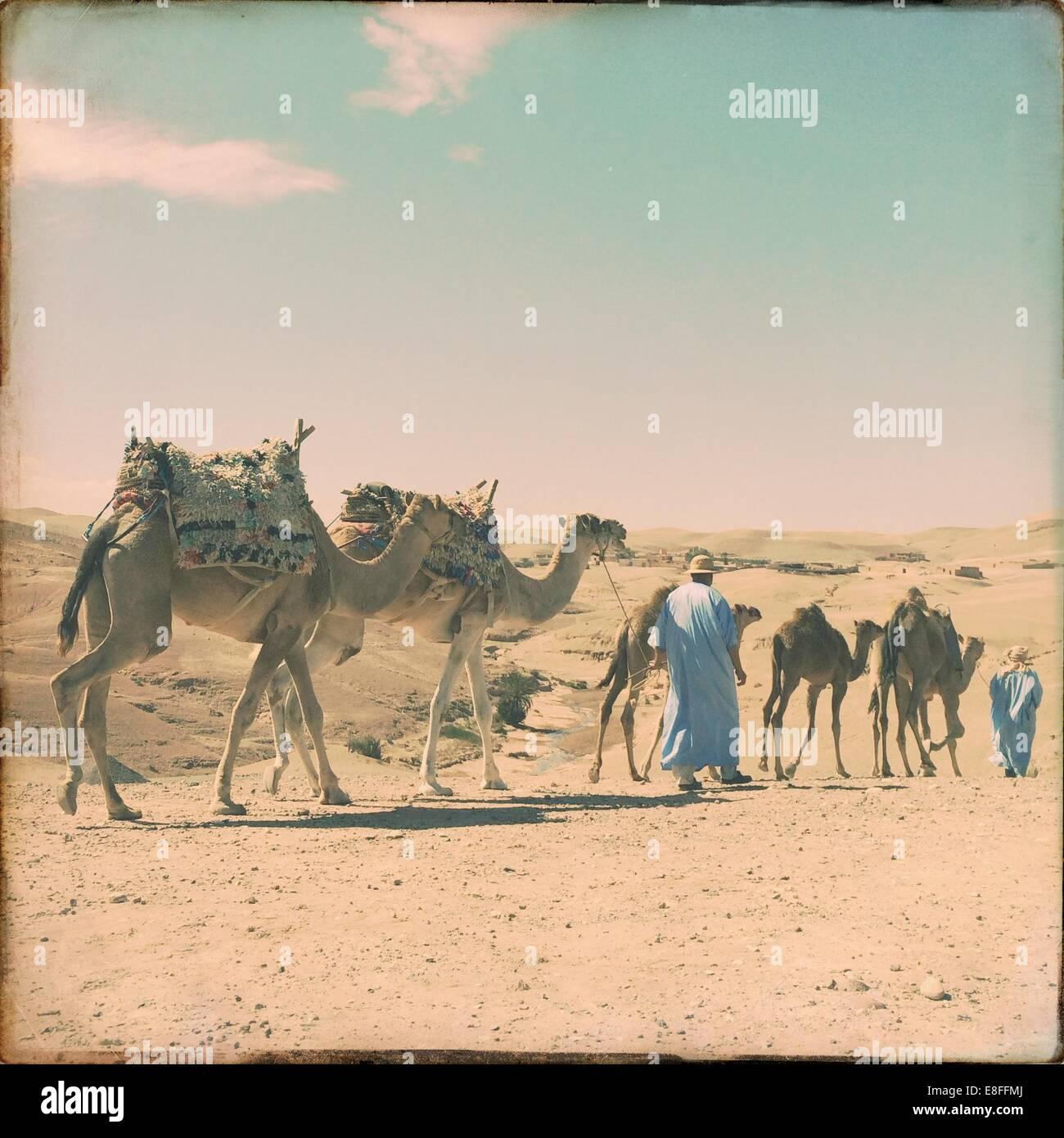 Gli uomini a piedi con una mandria di cammelli Immagini Stock