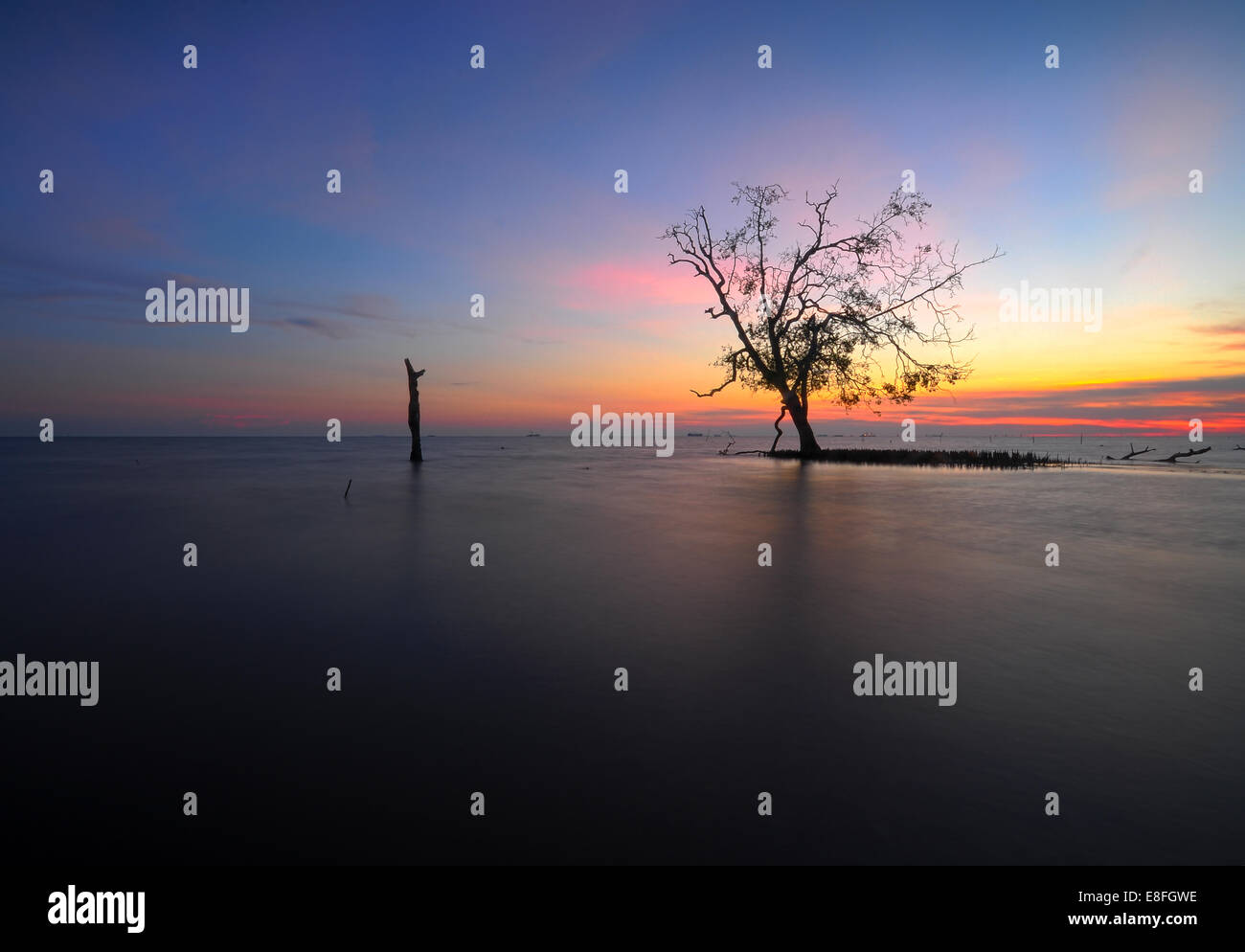 Malaysia, Selangor, Banting, singolo albero Kelanang sulla spiaggia al tramonto Immagini Stock