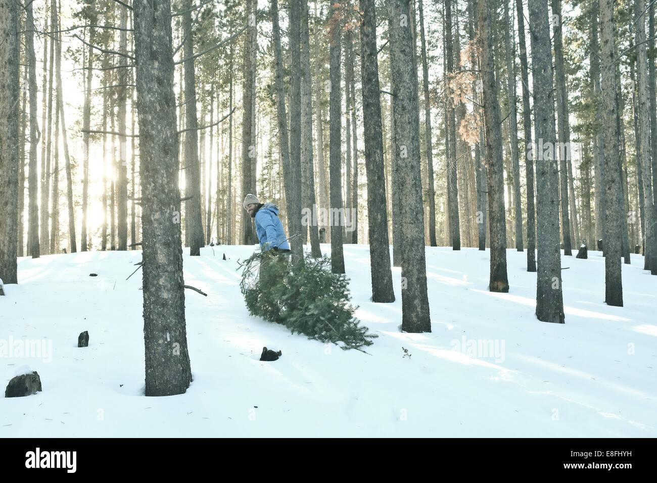 L'uomo trascinando albero di natale nella neve Immagini Stock