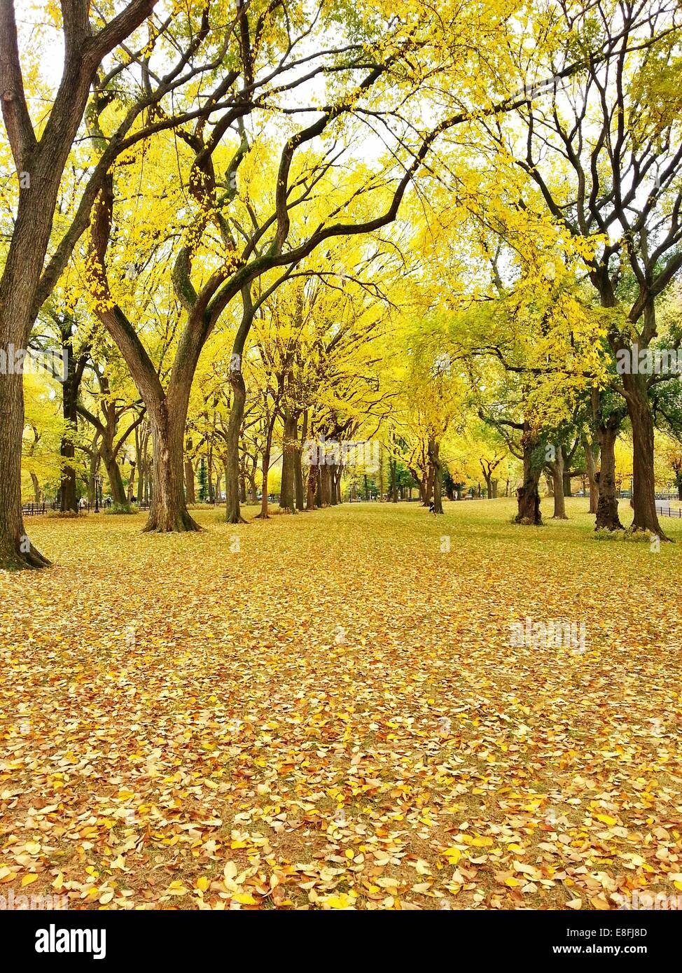 Central Park in autunno, Manhattan, New York, America, STATI UNITI D'AMERICA Immagini Stock