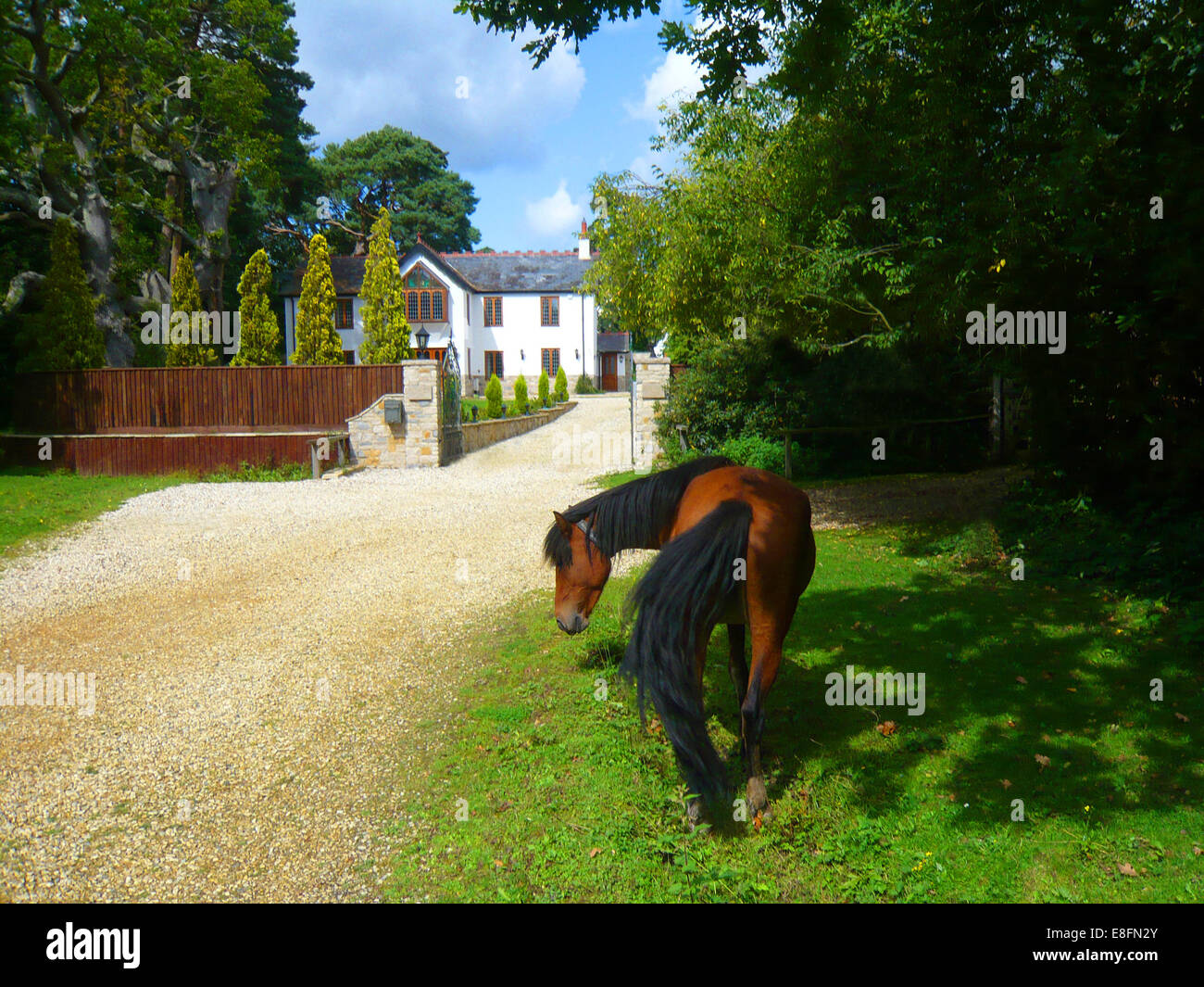 New Forest Pony fuori di una casa, Brockenhurst, Hampshire, Inghilterra, Regno Unito Foto Stock