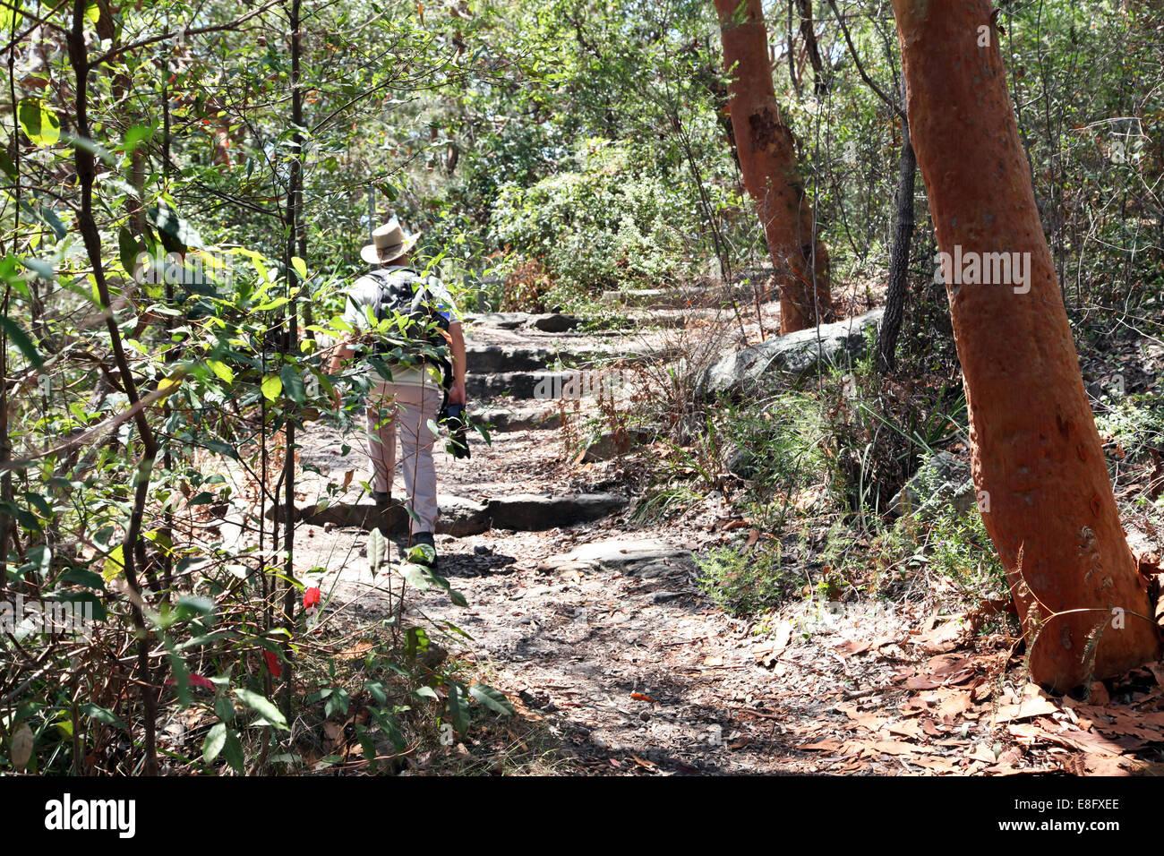 Australia, Nuovo Galles del Sud, Sydney, uomo a camminare nella foresta Immagini Stock