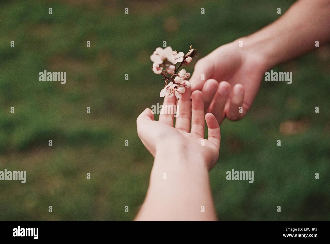 Due persone che condividono fiore Immagini Stock